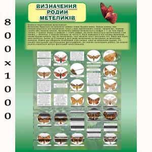 """Плакат по биологии """"Бабочки"""" -    Плакаты для кабинета биологии"""