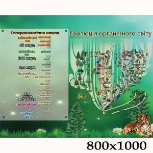 """Плакат по биологии """"Эволюция биологического мира"""" -    Плакаты для кабинета биологии"""