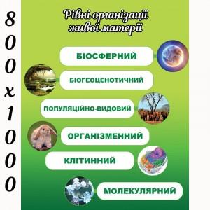 """Плакат по биологии """"Уровни организации"""" -    Плакаты для кабинета биологии"""