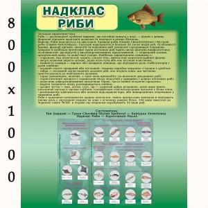 """Плакат по биологии """"Рыбы"""" -    Плакаты для кабинета биологии"""
