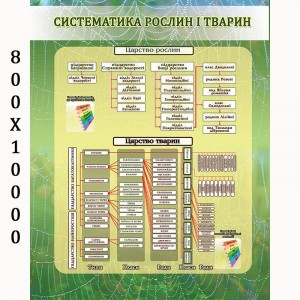 """Плакат по биологии """"Систематика растений и животных"""" -    Плакаты для кабинета биологии"""