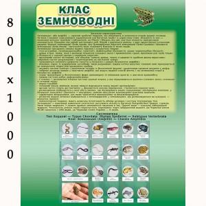"""Плакат по биологии """"Земноводные"""" -    Плакаты для кабинета биологии"""