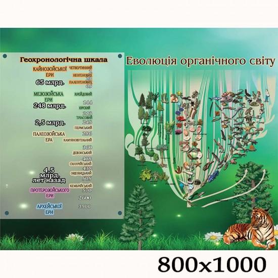 """Плакат з біології """"Еволюція біологічного світу"""""""