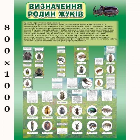 """Плакат з біології """"Родини жуків"""""""