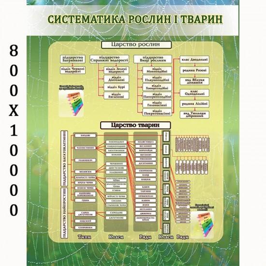 """Плакат з біології """"Систематика рослин і тварин"""""""