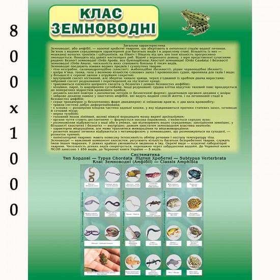 """Плакат з біології """"Земноводні"""""""